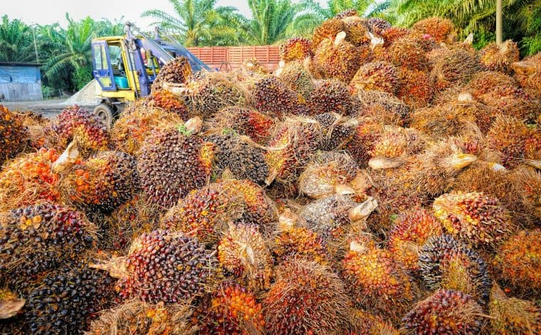 palm-oil harvest by pixabay