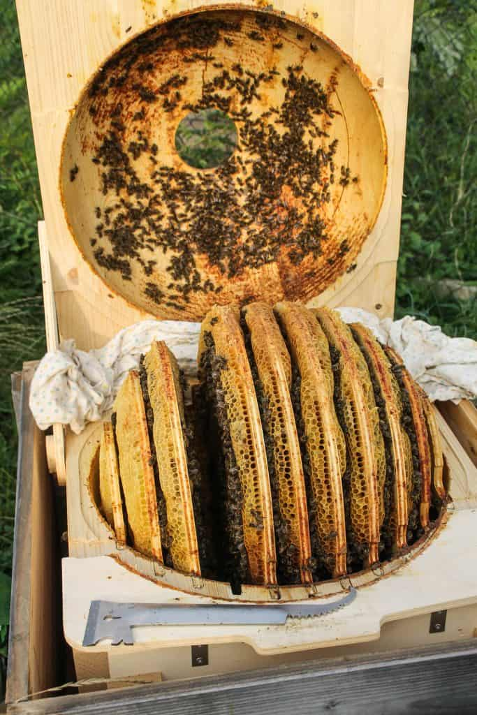 Bee Ball front - Truefoodsblog (1 of 1)