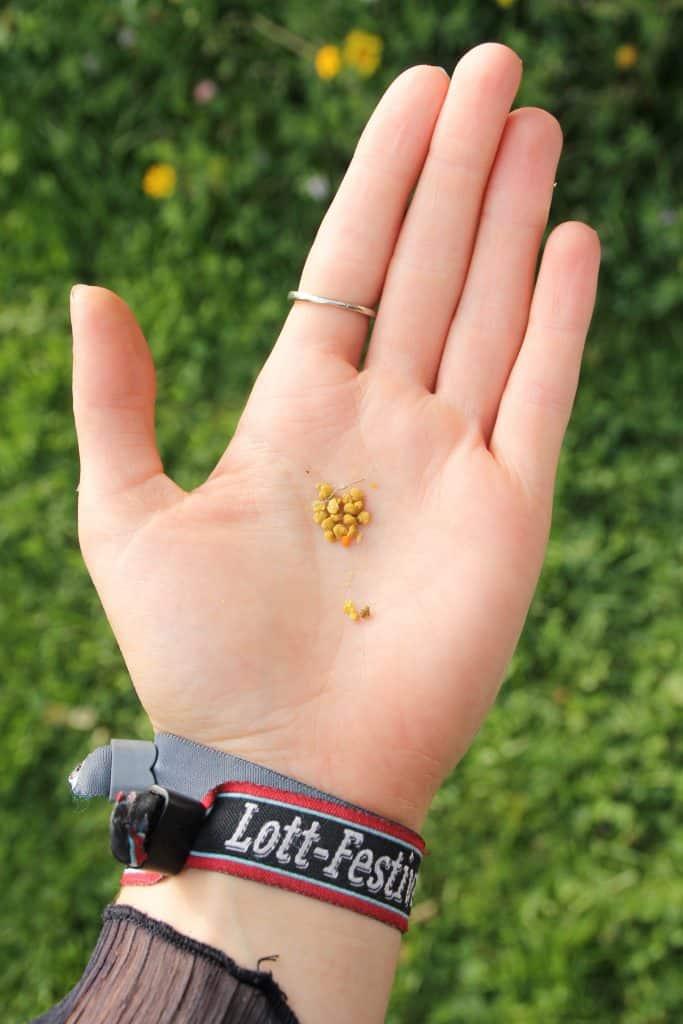 Bee Pollen on my hand - Truefoodsblog (1 of 1)
