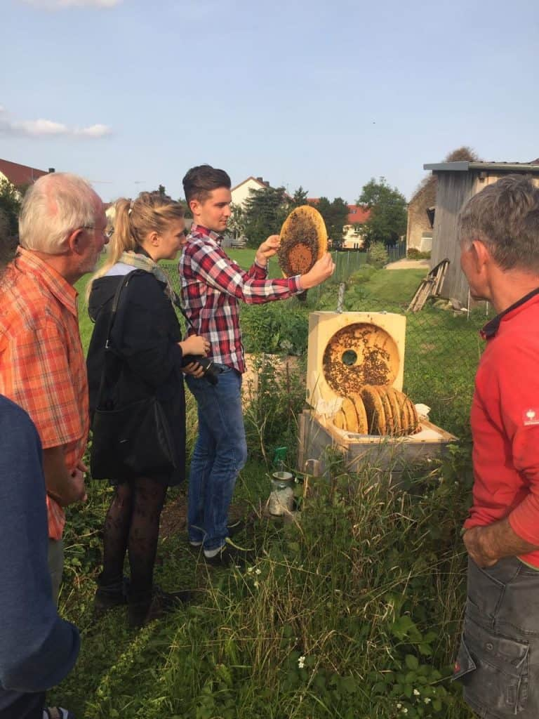 tLooking at the Bees - Truefoodsblog