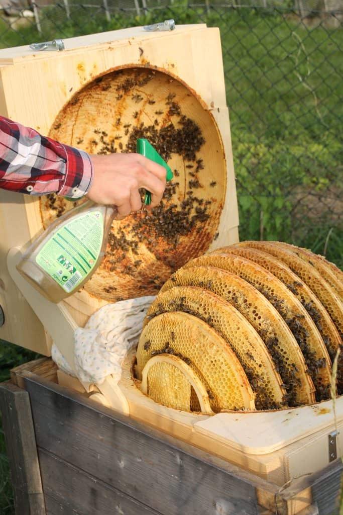 Beekeeping as a Hobby by Truefoodsblog
