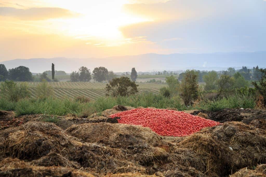 Italy,Toscany, Fattoria La Vialla