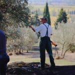Olive Oil la Fattorria la Vialla by Truefoodsblog